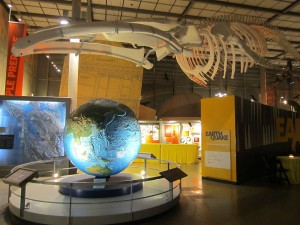 california-academy-of-sciences-02